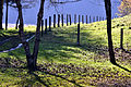 Moosburg Kreggab Feldweg 30102010 448.jpg