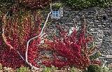 Moosburg Schloss 1 Schloss W-Wand wilder Wein Auschnitt 23102018 5138.jpg
