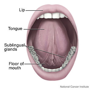 Mouth and tongue.jpg