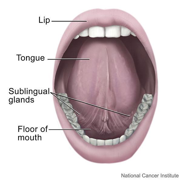 rongga mulut