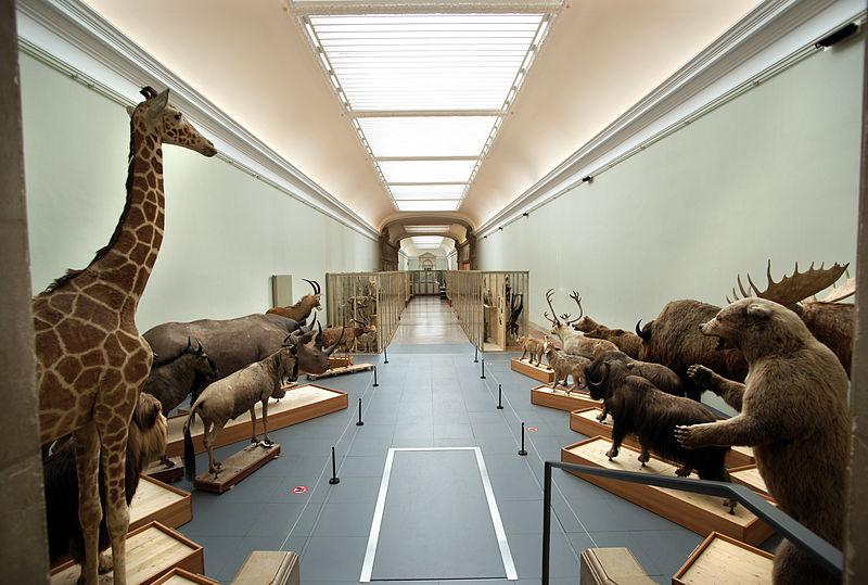 Fichier:Musée cantonal de zoologie (Lausanne), 07.JPG