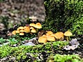 Mushroom at Beni Mtir.jpg