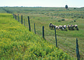 NRCSWY70001 - Wyoming (6925)(NRCS Photo Gallery).jpg