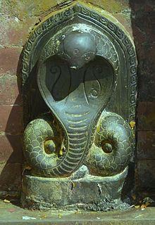 ancient tree of life symbol