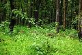 Nagarhole National Park, Kodagu 6901.JPG