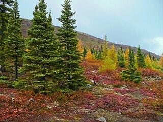 Foto Borealer Herbstwald
