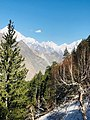 Nalter valley hunza.jpg