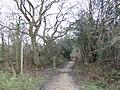 Narrow byway - geograph.org.uk - 320134.jpg
