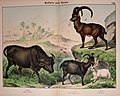 Natural history of the animal kingdom for the use of young people (Plate XXIV) (5974935324).jpg