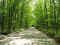 Natural tunnel in Simcoe, Ontario (4620484468).jpg