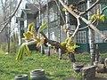 Nature in Smolensk - 01.jpg