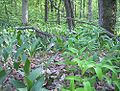 Nature reserve Dabrowa Radziejowska03.jpg