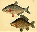 Naturgeschichte in Bildern mit erläuterndem Text (Taf. CXL) (6058683487).jpg
