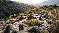 Necròpolis del Mas del Pou.jpg