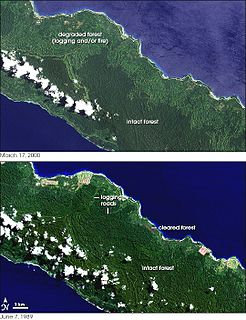 Deforestation in Papua New Guinea