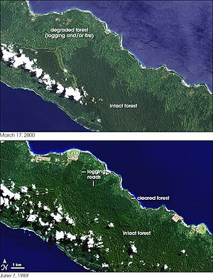 Deforestation in Papua New Guinea - Satellite images exemplify massive loss of forest cover in New Ireland between 1989 (bottom) and 2000 (top)