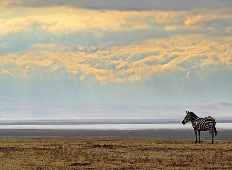 Ngorongoro-Crater-Morning-Scene.JPG
