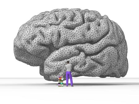 Nicolas P. Rougier's rendering of the human brain.png