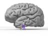 Nicolas P. Rougier'in insan beynini yorumlaması.png