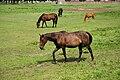 Nordkirchen-090806-9414-Pferde-vor-Westfluegel.jpg