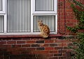 Nottingham MMB F4 Wensor Avenue.jpg