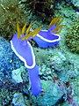 Nudibranch on Chocolate Island.jpg