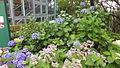 Nunobiki Herb Garden in 2014-7-6 No,19.JPG