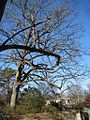 Oaklawn Garden 2011-01-29 Poplar Pike Germantown TN 09.jpg