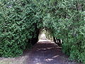 Obelynes parkas.jpg