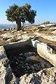 Olive and water - panoramio.jpg