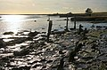 Orford foreshore - geograph.org.uk - 661416.jpg