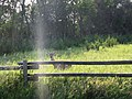 Over the fence 2008-08-18 (2777247508).jpg
