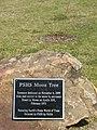 PSHS-Moon-Tree-8015.jpg