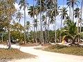 Palmera de Parque Morrocoy - panoramio.jpg