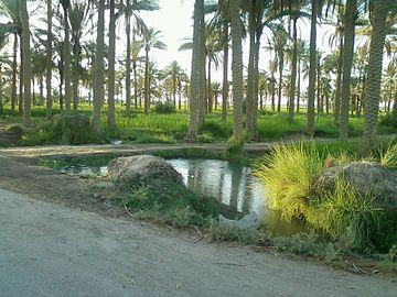 Palms field 03.jpg