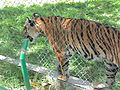 Parque Zoologico de Caricuao 2000 024.JPG