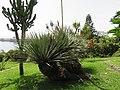 Parque de Santa Catarina, Funchal - 2020-09-08 - IMG 8660.jpg