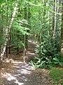 Path Through Hood Wood - geograph.org.uk - 180448.jpg