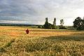 Path Through a Field of Barley - geograph.org.uk - 855369.jpg