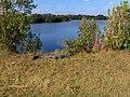 Paurotis Pond^ - panoramio.jpg