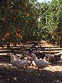 Peace in orangery.jpg