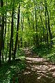 Peilstein Wanderweg 20160507 03.JPG