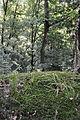 Peklo u Nového Města nad Metují, Kozí hřbet 16.JPG