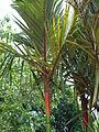 Penang Botanic Gardens (46).JPG