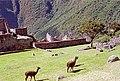 Peru-188 (2218692840).jpg