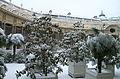 Petit Palais - Plantes du Jardin Intérieur sous la neige.jpg