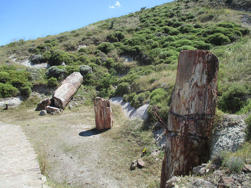 Petrified forest of Lesbos 16.jpg