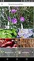 Pflanzenbestimmung anhand bestimmter Pflanzenteile durch Pl@ntNet.jpg