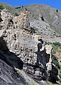 Phosphoria Formation (Permian; Astoria Hot Springs roadcut, Teton County, Wyoming, USA) 26 (49192294331).jpg