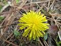 Photo-OutdoorImage-Adobe-Yellow-Flower.jpg
